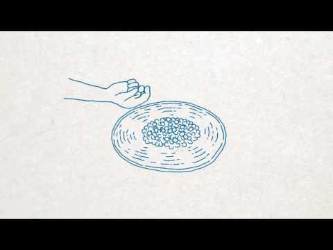 「一粒の豆」 ~幻のコーヒー トアルコ トラジャ~