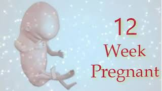 12 Weeks Pregnant: What To Expect
