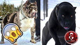 """TOP 7 ANIMALES QUE FUERON CREADOS POR EL """"DIABLO"""