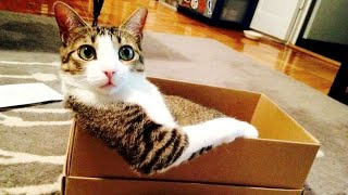 STRESSFUL LIFE? FUNNY ANIMALS will make you RELAX & LAUGH!