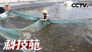 《科技苑》 20180412 沙漠边上养海虾 | CCTV农业