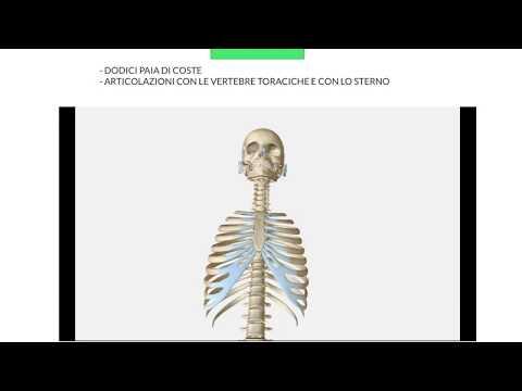 Massaggio da crescite di mal di schiena