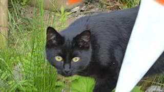 Katze Mimi – Katzenspiel