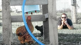 The automatic chicken waterer for the UNHANDY