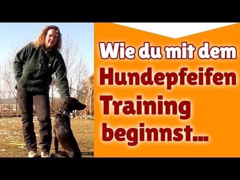 Hundepfeife Training ► Wie du mit dem Hundepfeifen Training beginnst ► Hundetraining Tipps