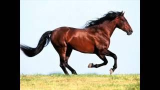 Лошади, Лошади