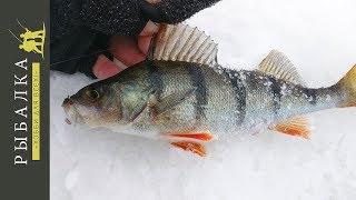 Зимняя рыбалка на финском заливе места