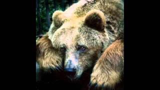 bears.wmv