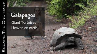 The Galapagos Islands (2020)