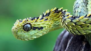 Mind blowing Snake Species