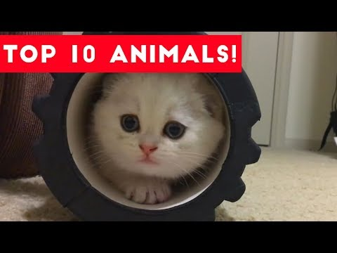 Top Ten Funny/Cute Pet Videos of August Part 4