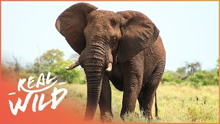 The Sacred Elephant And Camel - Their Spiritual Meaning | Amazing Animals | Wild Things Documentary