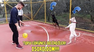 Bu Köpeklerin Ağzından Top'u Alana Helal Olsun - TOP'U GÖRÜNCE DELİRDİLER!!