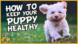 Essential Puppy Care: How To Keep A Puppy Healthy In 9 Simple Steps - Dog Health Vet Advice