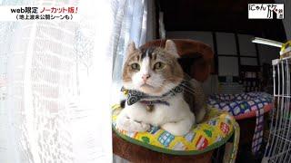 Vol.23「にゃん旅鉄道」休憩時間は大好きな…♥にゃん!