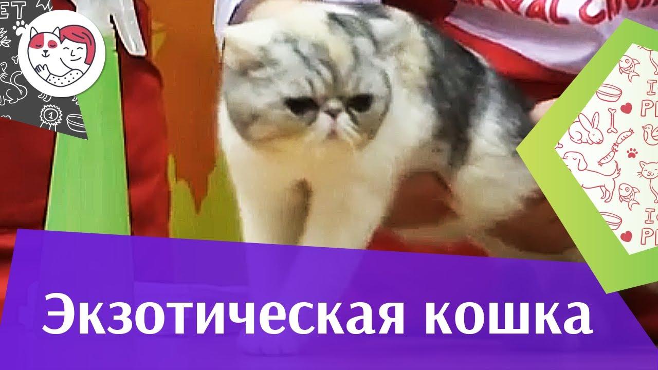 Экзоты Здоровье на ilikepet