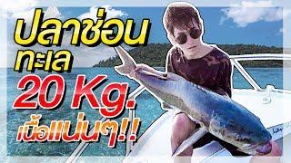 ออกล่าโคตรปลาช่อนทะเล!! หนัก 20 Kg เนื้ออย่างแน่น!! l ออกล่ากิน EP.2