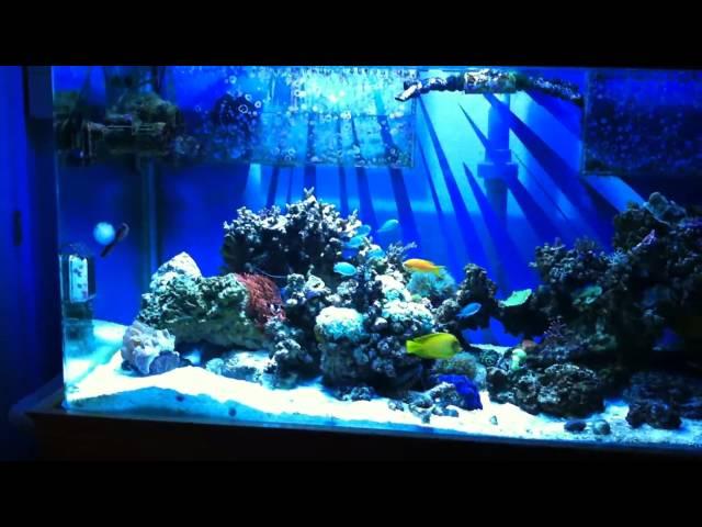 HD 170G Reef Tank! 5 Months.