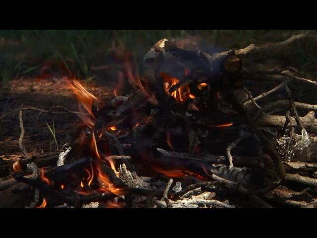 В лесах снова можно отдыхать