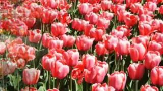 Primavera - Vivaldi  ( As Quatro Estações )