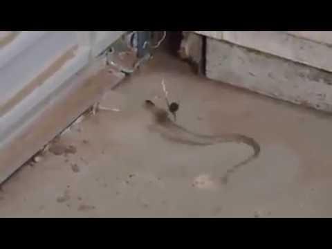 蜘蛛網竟然能困住一隻小蛇..結果...