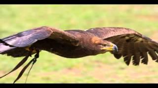 (Gli Uccelli) del maestro F.Battiato Canta C.Zuppardi (COVER)