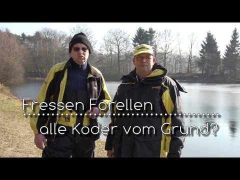 Die Parasiten und die Infektionen im Fisch