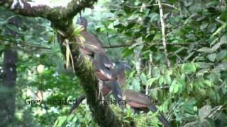 Costa Rica Birding Arenal Observatory Lodge