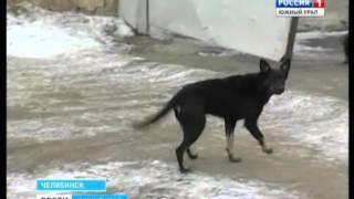 """Убийства бездомных животных в """"Горэкоцентре"""""""