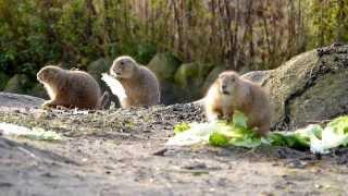 2013 Diergaarde / Zoo Blijdorp December