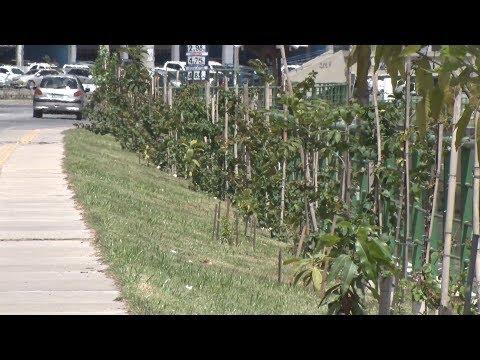 Menos da metade das vias públicas de Nova Friburgo são arborizadas
