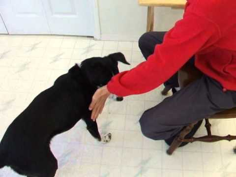 Training Concepts What Is Shaping Dogtrainingology