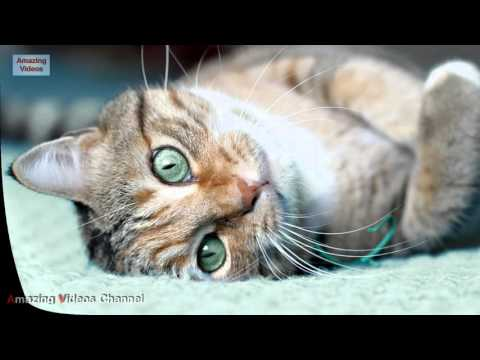 8 Important Tips For New Cat Owners