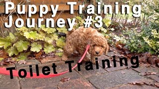 Puppy Toilet Training. No Accidents in the Home! #3