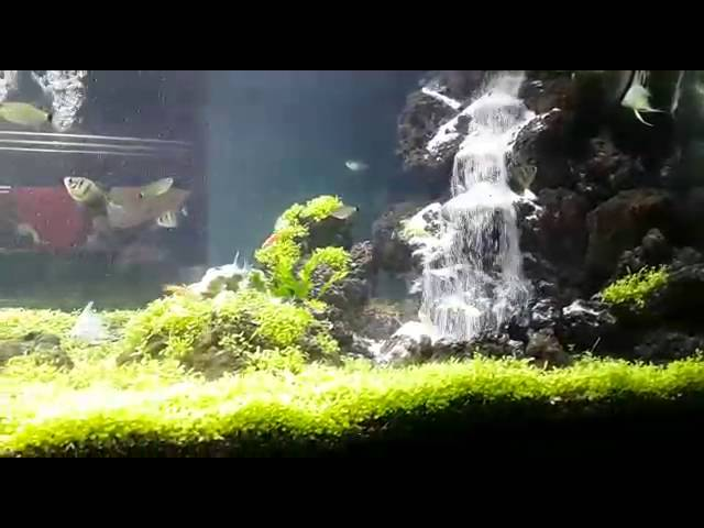 Aquascape Air Terjun Aerator Aquatic Videos