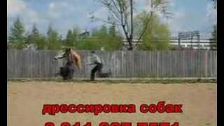 Собака боксёр, профессионально-прикладная подготовка собак