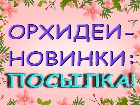 Ура!Новые ОРХИДЕИ в КОЛЛЕКЦИЮ.Посылка с орхидеями!!!