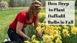 Planting Daffodils in Fall: How Deep to Plant Daffodil Bulbs | Kelly Lehman