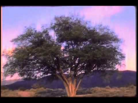Woodsman - When The Morning Comes (Official)