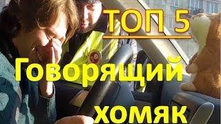 ТОП 5.  Говорящий хомяк.  Видео приколы 2013-2014