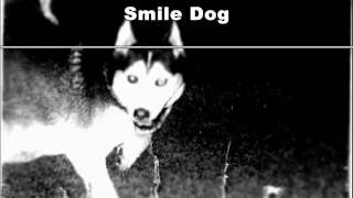 Real Life Myths - Smile Dog