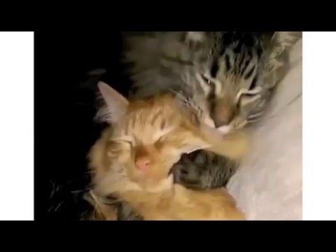 CatGenie Acatemy Awards Top 5 Cat Videos