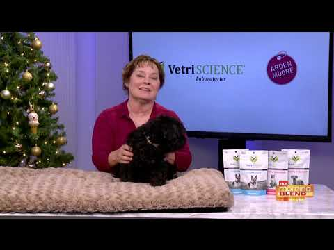 How to Manage Your Pet's Holiday Stress