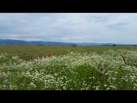Звуки Природы | Сверчки и Звук Ветра, Шелест Травы - 3 часа Релакса