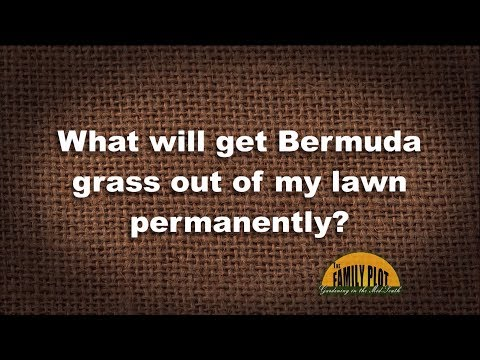 Q&A – What will get Bermuda grass out of my lawn?