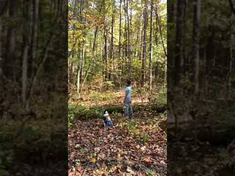 Video Of Hoosier National Forest North Face Loop Campground, IN