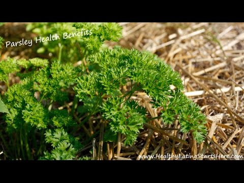 Video Parsley Health Benefits - Can Parsley Beat Kale?