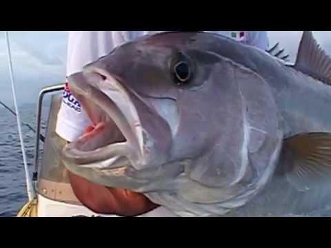 Topo come unesca per pesca