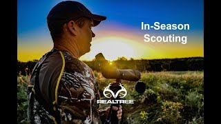 Deer Hunting: How to Scout During the Season