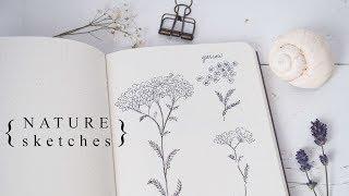 More Botanical Illustration: Sketching The Natural World